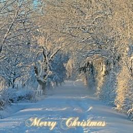 christmas-1060532_1280